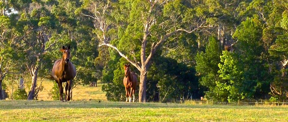 Horses Twilight