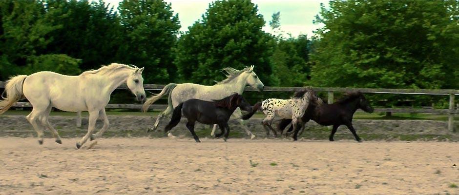 Ponies Arena